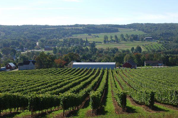 Nova Scotia Vineyards - Wine Tours