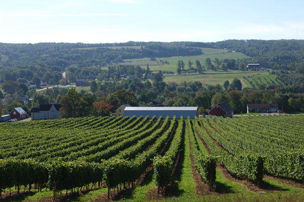 Nova Scotia Vineyards - Wine Tours