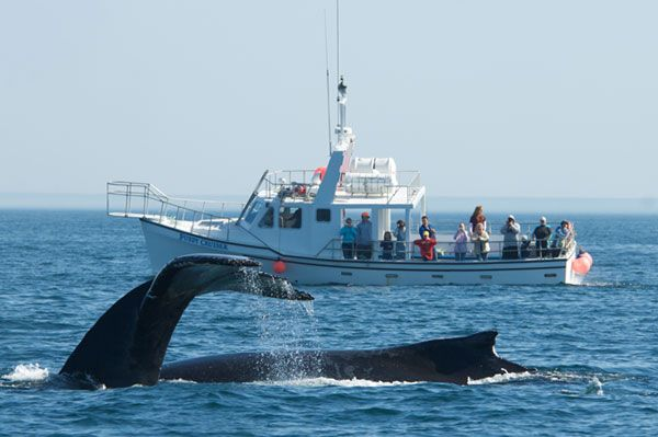 Nova Scotia Whale Watching Vacations